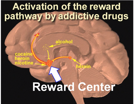 Brain chemicals and porn addiction