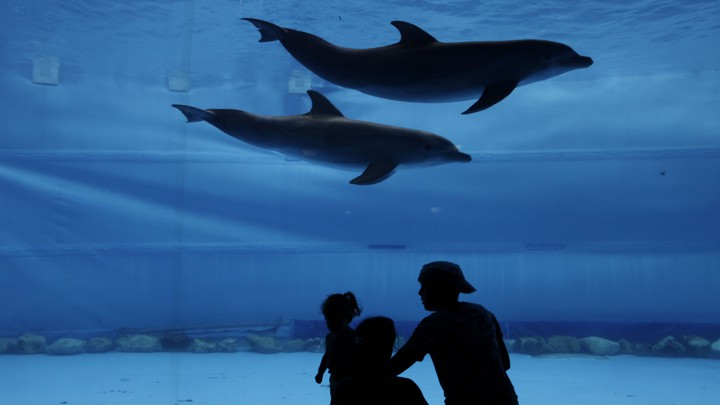 Dolphins having intercourse with humans