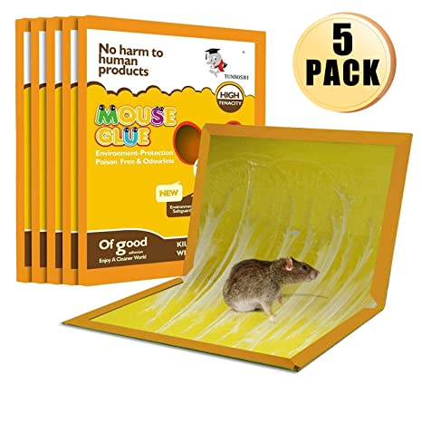 Rat and mouse glue traps