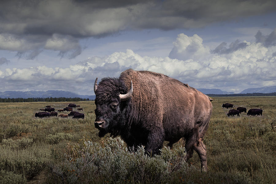 Find free sex in bison oklahoma